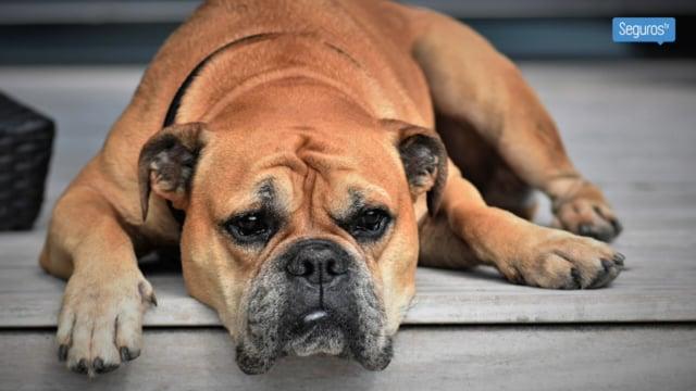 Menos del 2% de las mascotas cuentan con un seguro específico
