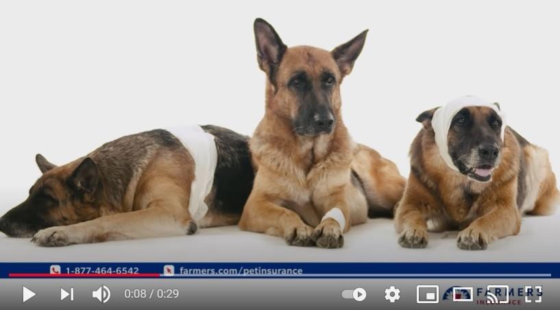 Las mascotas se sienten más seguras en este spot de Farmers Insurance