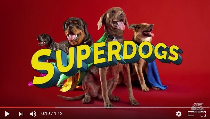 ¿Recuerdas? Generali confía en los Superdogs para hacer los hogares más seguros